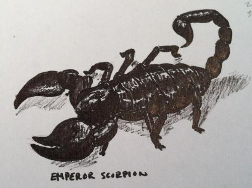 Emperor scorpion Some kind of felt-tipped pen. October 1st 2012. Reference: (x). Haven't updated in a while, sorry! I drew this during an illustration class at the Pennsylvania Academy of Fine Arts; they basically told us we could draw whatever we wanted to and I was in an arachnid sort of mood.