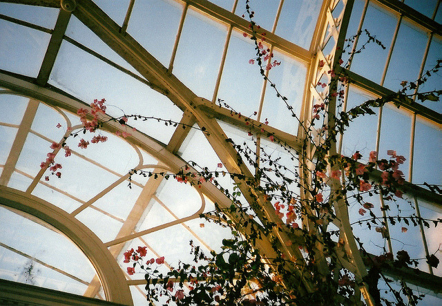 palmhouse by this is my collection on Flickr.