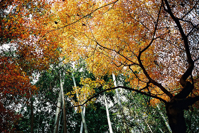 untitled by deader than yesterday on Flickr.