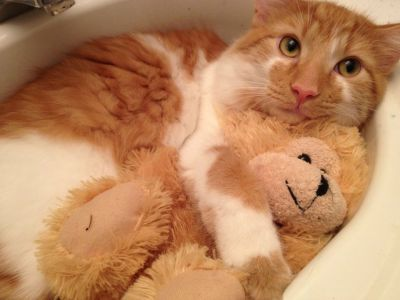 He brings his teddy bear into the sink with him.