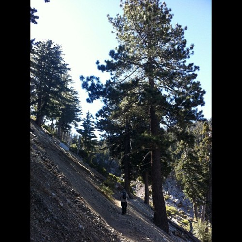 Ice House Canyon #trail #angelesnationalforest #trees #mountains #hiking #eddyizm #california  (Taken with Instagram)