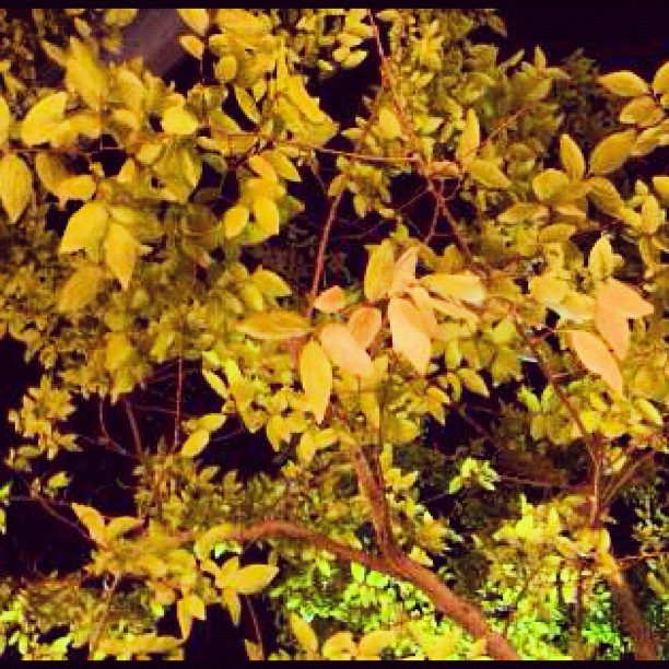 Day 2-#fall #leaves my favorite season is almost here!! #photoadaychallenge #photoadayoctober #octoberphotoaday #octoberchallenge  (Taken with Instagram at Westfield Galleria at Roseville)