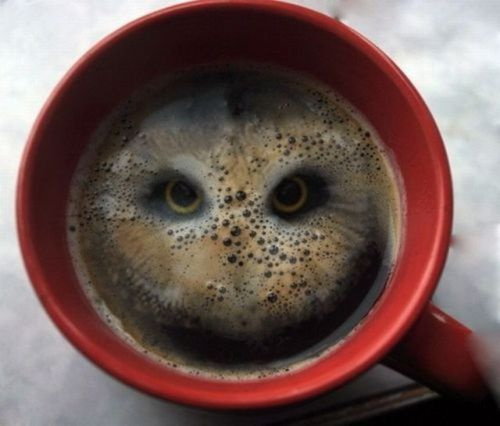"archiemcphee:  ""The owls are not what they seem."" But this cup of coffee sure does look like an owl. A friend of London-based artist Stuart Rutherford dropped a couple Hula Hoops (crunchy, cylindrical potato-based snacks) into their coffee and only to discover a bird of prey staring back up at them.  Stuart posted the picture via his twitter feed last week accompanied by the words: ""Who'd a thunk dunking a couple of Hula Hoops in your coffee would be so beautiful.""  [via Bored Panda]"