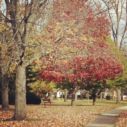 #fall #autumn #leaves #seasonschange #season #october #halloween #red #yellow #park #photography #traphotography #aullaboutyou (Taken with Instagram)