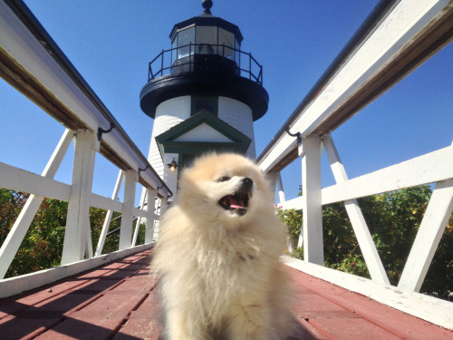 tommypom:  I decided to move into this tiny lighthouse so i can radiate my smile to all the passing ships. Your smile-gifting pal, TommyPom