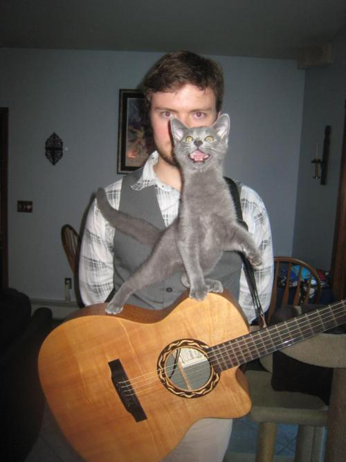 hamburgerjack:  catasters:  Screw this band, I'm going solo! Photo via Imgur  OMG GO CAT
