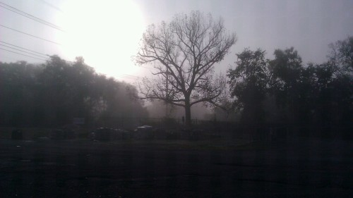 Good (foggy) morning!