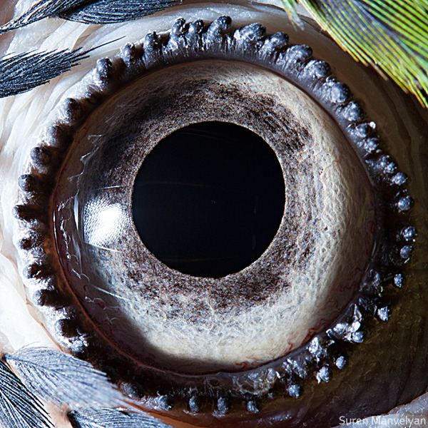 "Suren Manvelyan's ""Animal eyes"""