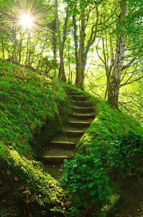 bluepueblo:  Mossy Stairs, Perthshire, Scotland photo via jami
