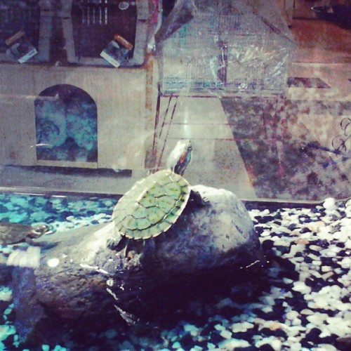 Pretty and little turtle  (Tomada con Instagram)