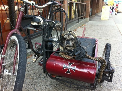Beware of the sidekick (or sidecar?) assassin dog