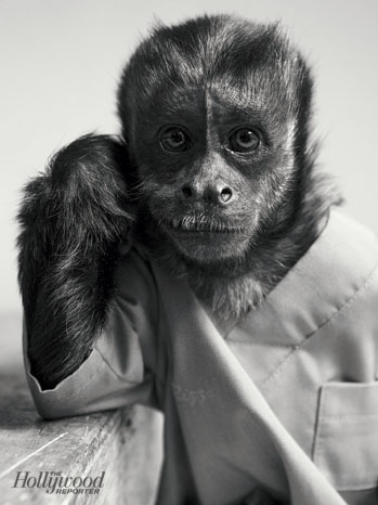 "emmyblotnick:  Quick reminder: A monkey made The Hollywood Reporter's list of ""100 Fresh Faces"" and you didn't."