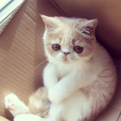 """Do I have to leave the box?"""