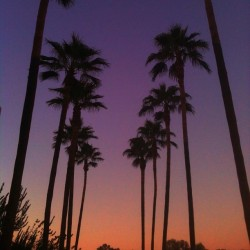 Arizona Sunsets #arizona #sunset #sky #palmtrees #hotizon #ignation #igaddict #instahub #webstagram #igdaily #iphonesia #all_shots #gang_family #jj #jj_forum #iphoneonly (Taken with Instagram)