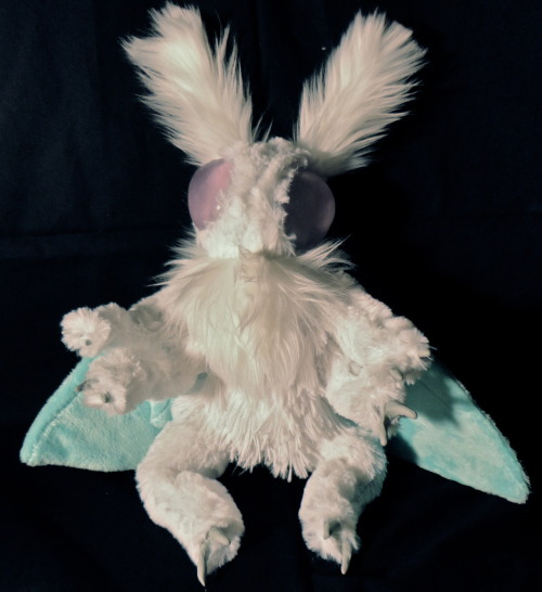 fyeahcutemoths:  I make mothbabies!  Aren't they cute? (available on Etsy too)