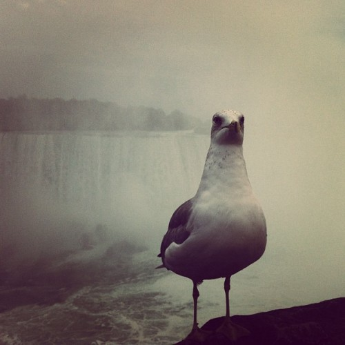 mutemath:  Smug bird. Niagara Falls. (Taken with Instagram)
