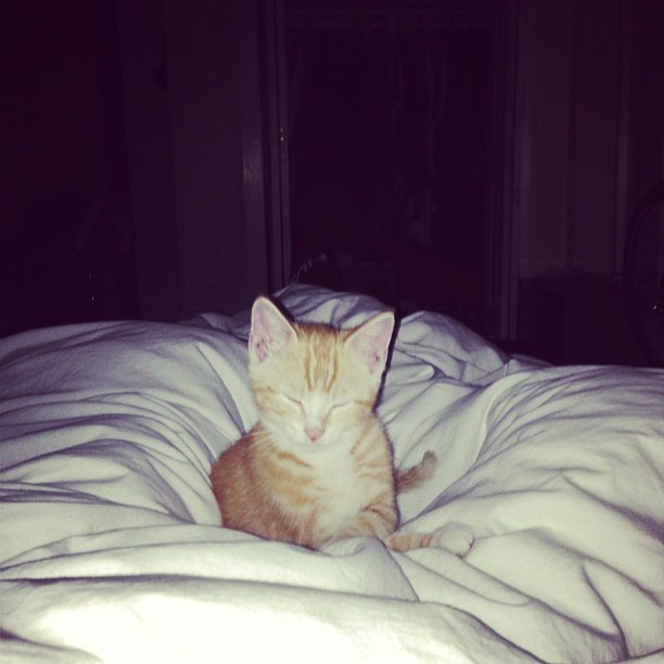 tolleyalways:  The nestler. #kitty (Taken with Instagram)