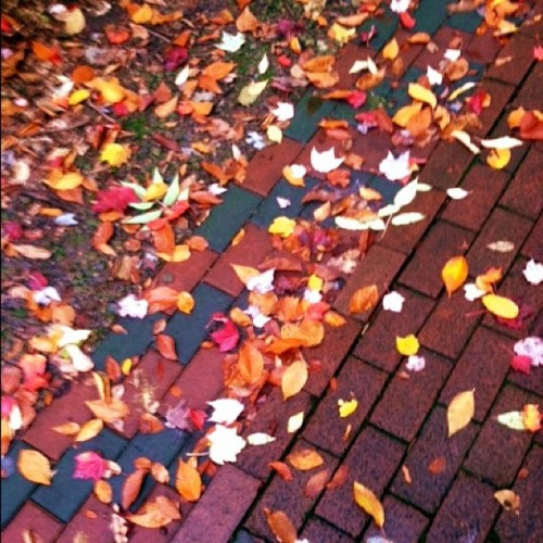 Autumn, Brick Walk. @chq #Chautauqua #Autumn #Fall #leaves #color #beauty #red #orange #yellow #today #run #nature #paths  (Taken with Instagram)