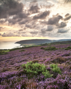 enchantedengland:     Exmoor is loosely defined as 'an area of hilly moorland in west Somerset and north Devon' Let's just say it is in South West England and is unspoilt geographical happiness. (peterspencer49 flickr)
