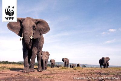 Elephants are the LARGEST land mammals on the planet. Help us kill the illegal trade in ivory before they're gone from the wild forever. http://bit.ly/UfmJrQ