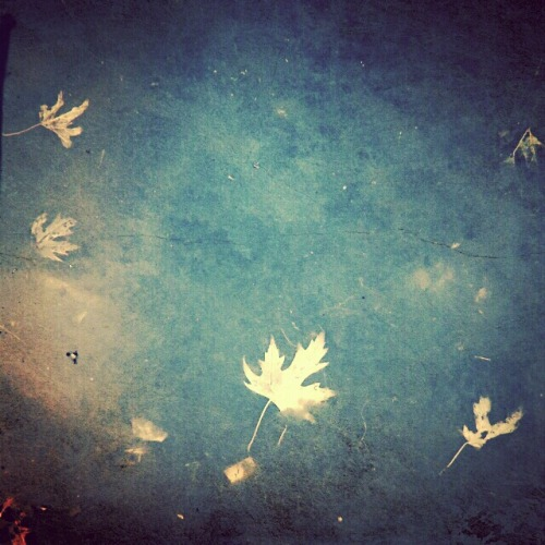Underwater leaves. #photography #leaves