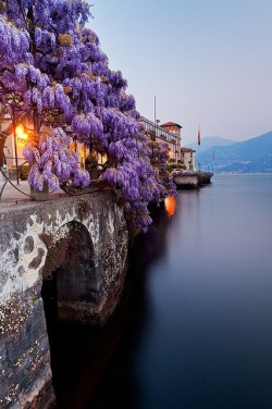 bluepueblo:   Wisteria, Lake Como, Italy photo via appleday