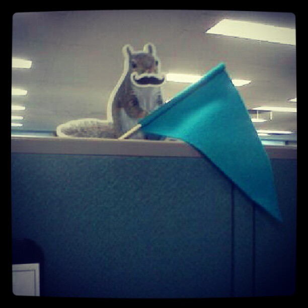 This one is called: squirrel with a mustache and flag (Taken with Instagram)