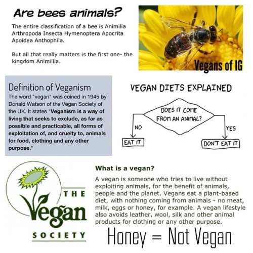 "vegansofig:  Honey is not vegan. If it comes from an animal, it's not vegan.  Bees are a part of the animal kingdom. Therefore, any byproduct from a bee is not vegan. Raw honey, organic honey, free range honey, whatever you want to call it, it's still not vegan. To say it is a waste not to use their byproducts contributes to the objectification of animals, and perpetuates the myth that's it is okay to use them for ourselves. They exist for their own reasons.  If it comes from an animal = not vegan. By definition, animal products that are not flesh are considered ""vegetarian.""  I'm not the vegan messiah. Yes, this is my blog, but what I'm saying isn't anything new. You may not like what I have to say all the time, but I will not alter facts to make a point. I'm going to use Stephen Colbert's ""truthiness"" to describe what's going on here. ""The quality of stating concepts one wishes or believes to be true, rather than the facts."" The arguments in favor of honey as somehow being vegan, sounds a lot like the arguments I hear omnivores justifying the consumption of animal products. For example, take the sentence, ""I eat the eggs from my chicken farm. We treat our chickens with kindness and their eggs are organic."" Not vegan, right? Right. Okay, now replace the word ""eggs"" with ""honey"" and ""chicken"" with ""bee."" Does that scenario change because the species of animal changed? No. Still not vegan.  Bees are an essential part of life. We need to leave bees alone and let them pollinate as they would naturally. However, this fact does not somehow make the consumption of bee byproducts as ""vegan."" Bees produce honey by swallowing nectar into their crop, regurgitate it, add enzymes (spit), chew, swallow and repeat many times.  Eating their honey is not ""supporting the bees."" Now, I'm not going to go around pointing fingered saying ""you're not vegan enough!"" However, I will not go along with the idea that honey is somehow vegan. It's not. All I'm saying is that honey is not vegan. #vegansofIG http://instagram.com/p/QVJ6qlmiWt"