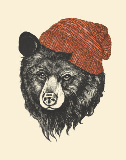 eatsleepdraw:  zissou the bear