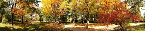 northwesternu:  The Evanston campus is exploding with autumn beauty. View full size: http://bit.ly/Rg8aOM Tweet your own fall photos to @NorthwesternU with hashtag #NUFallColors
