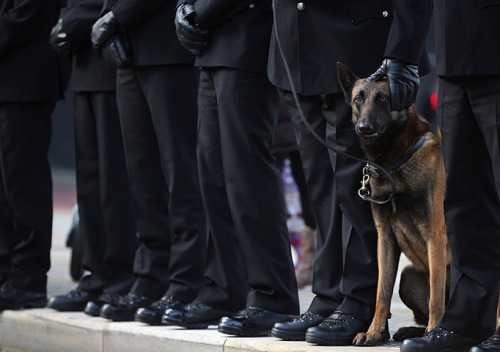theanimalblog:  Manchester, England: Police dog Vinny waits with his handler, as officers line the route for the funeral cortege of PC Nicola Hughes at Manchester cathedral. Photograph: Christopher Furlong/Getty Images