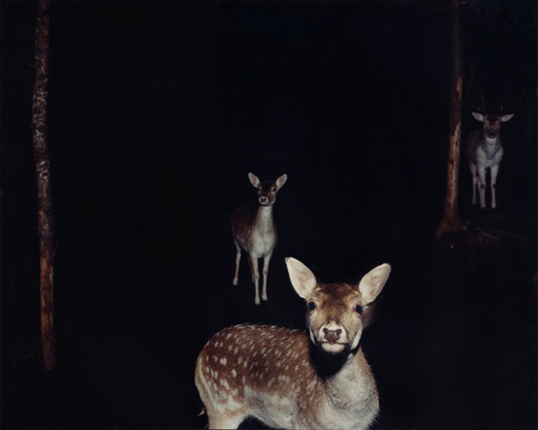 """Deer at night"" Maine, 2002, chromogenic print © Jocelyn Lee   via Photographs on the Brain/LPV. Tough to pick a favorite in Jocelyn's amazing web portfolio."