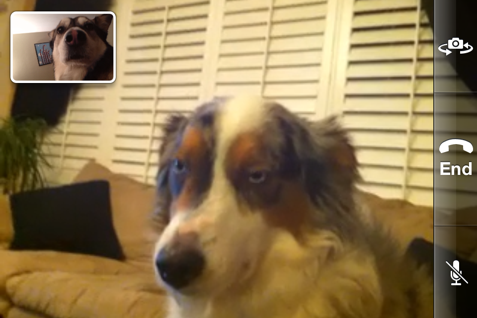 """Hello, this is dog"" (now with facetime) (complete story at thefluffingtonpost, via ktmengr)"