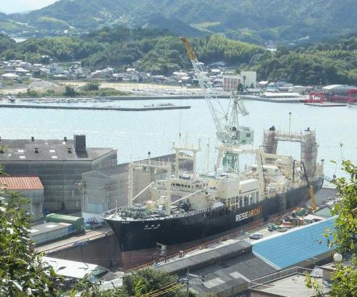 save-lolita:  Factory ship Nisshin Maru at dry dock in Hiroshima. Should also be retrofitting their fuel otherwise they are also breaking international maritime law for use of heavy oils. via Save the Blood Dolphins   Words can't describe the relief of seeing this floating death factory in dry-dock. Even if it is only temporary. If this ship is not sailing, the Japanese fleet is not whaling. In my opinion this vessel is the epitome of evil.