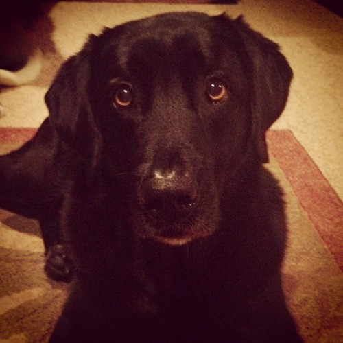 Still so damn cute after 10 years. #dog #lab #black #romeo #puppyface #labrador #retriever #k9 #calm (Taken with Instagram)