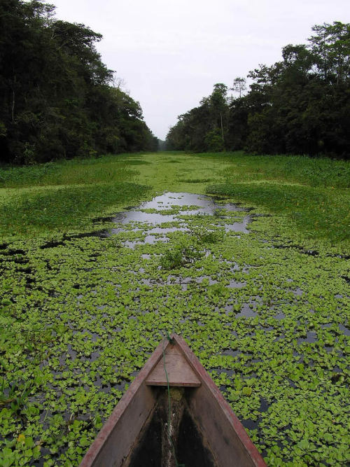 visitheworld:  Amazon River, Brazil. #river#amazon#jungle#nature#boat