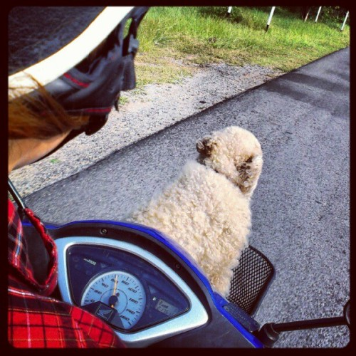@solembeem s doggy riding shotgun on the Thai highway (Taken with Instagram at สำนักงานเกษตรอำเภอพล)