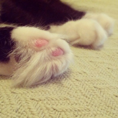 #SelinaCat 's epic #toehawks  (Taken with Instagram)