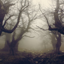 mykindafairytalee:  Walnut forest IV by *vbagiatis