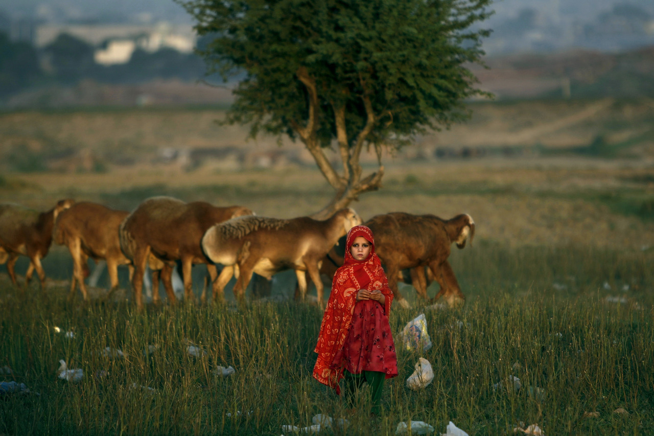 Oct. 1, 2012. An Afghan refugee girl stands next to her family's sheep in a field next to a slum area on the outskirts of Islamabad. (photo:Muhammed Muheisen–AP) From the U.S. presidential debate in Denver and a ferry disaster in Hong Kong to Europe's unbelievable Ryder Cup comeback in Illinois and a tiger cub at the Shanghai Zoo, TIME presents the best pictures of the week.  See more photos here.