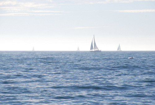 Sail boats & dolphin by Jean-François Chénier on Flickr.