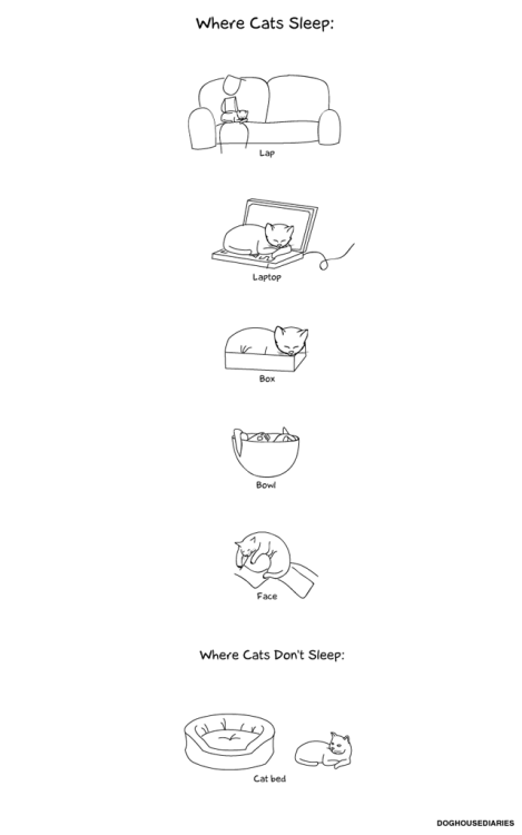 laughingsquid:  Where Cats Sleep  Kakakakak. True story