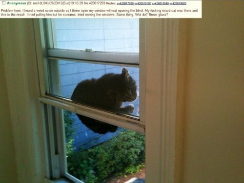 Cat Stuck in Window Now, meow exactly did this come about?