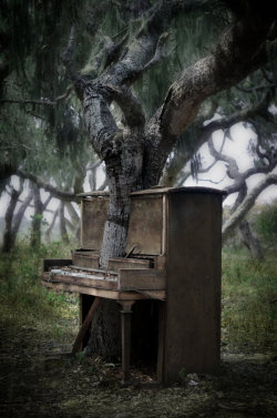 bluepueblo:  Piano Tree, Monterey, California photo via aday