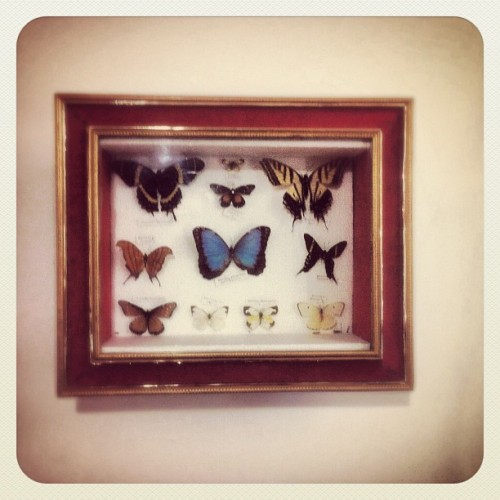 Mariposas en mi pared. #butterfly #nature #knowingtheworldthroughnature   (Taken with Instagram)