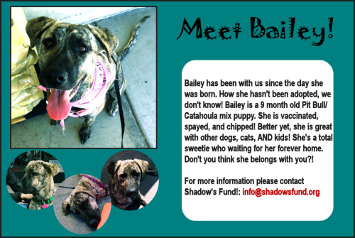 Meet Bailey! A sweet Pittie/Catahoula mix puppy who is still looking for a home. She was born into Shadow's Fund, and we still can't figure out why she hasn't found her forever home.