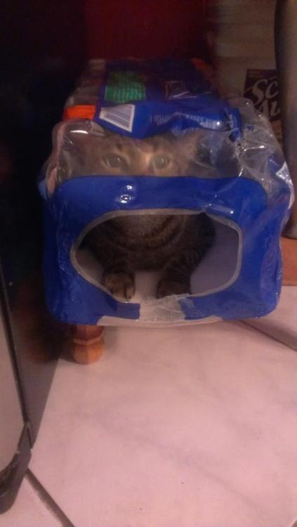 get out of there cat. you do not contain purified water.