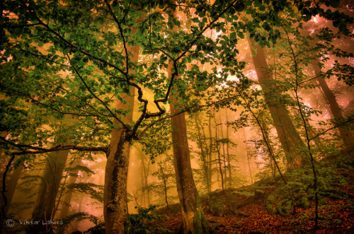 landscapelifescape:   Rhönblick, Germany The Veins of the Forest by Viktor Lakics