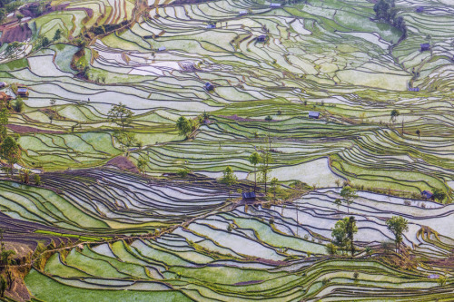 "landscapelifescape:  Yuanyang, Yunnan, China ""Ricefield Patterns #3"" by Chaluntorn Preeyasombat"