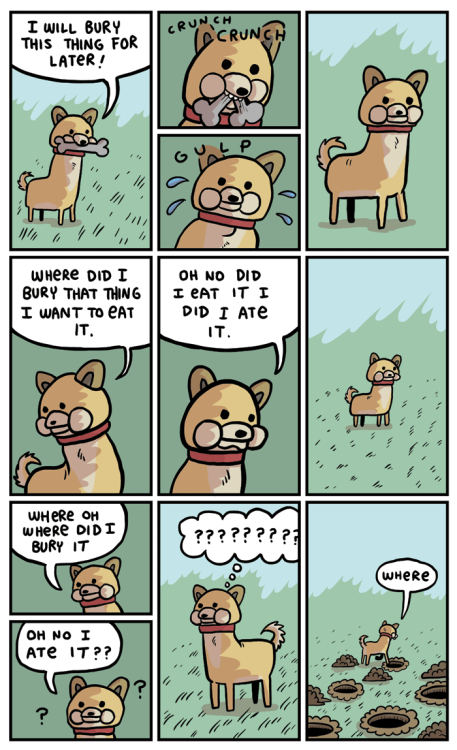 Every dog, ever.